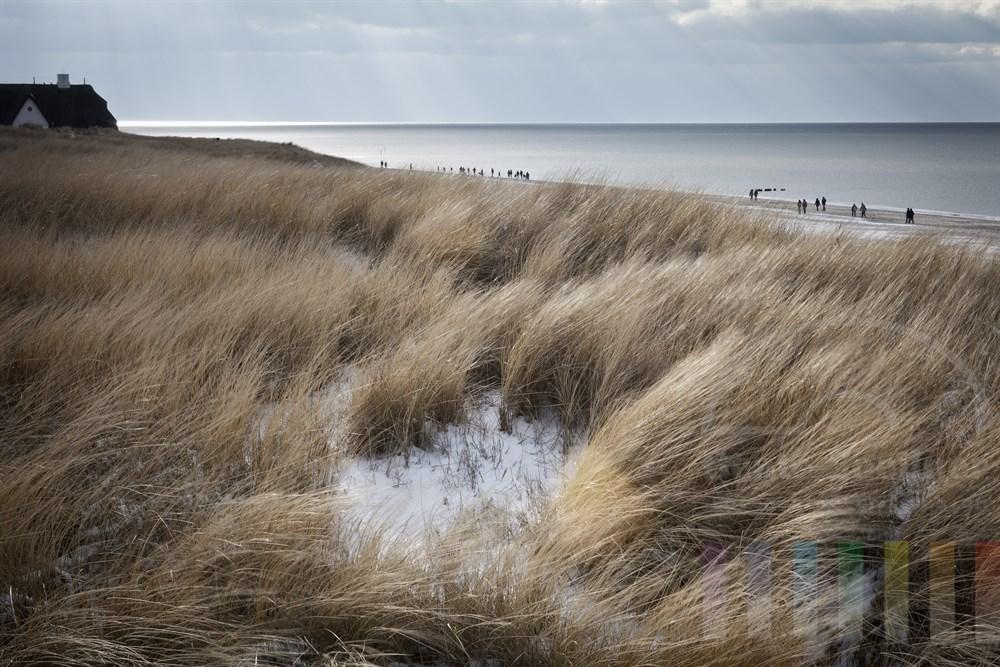 Schneidend-kalter Ostwind sorgt für eine nahezu unbewegte Nordsee vor Kampen/Sylt, einige Strandspaziergänger sind unterwegs und ein paar wenige Sonnenstrahlen lassen das im Wind wehende Dünengras aufleuchten, Am Bildrand das reetgedeckte Haus Kliffende.