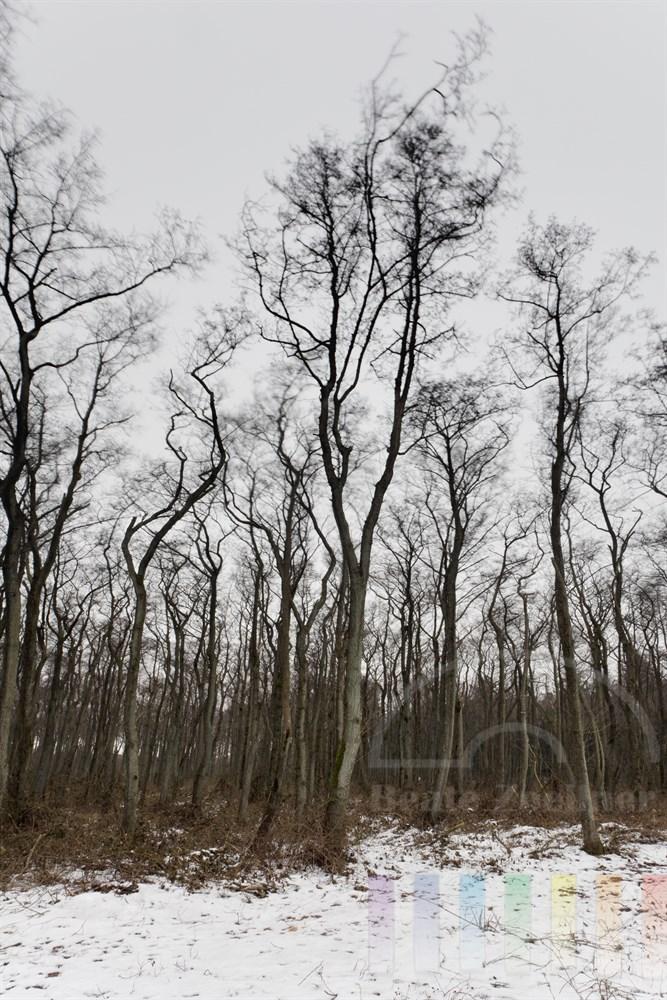 Kraeftiger Wind bewegt kahle Baeume am Waldrand, der Boden ist verschneit, Langzeitbelichtung