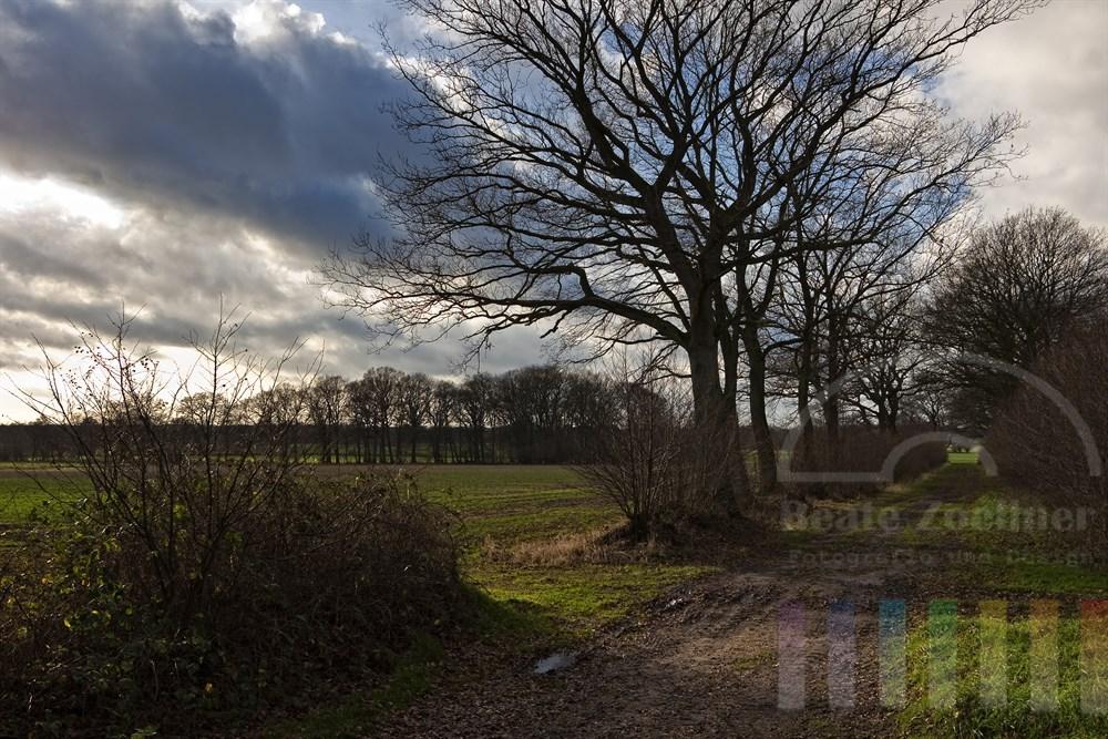 Feldweg führt durch typisch schleswig-holsteinische Knick-Landschaft, herbstlich-sonnig