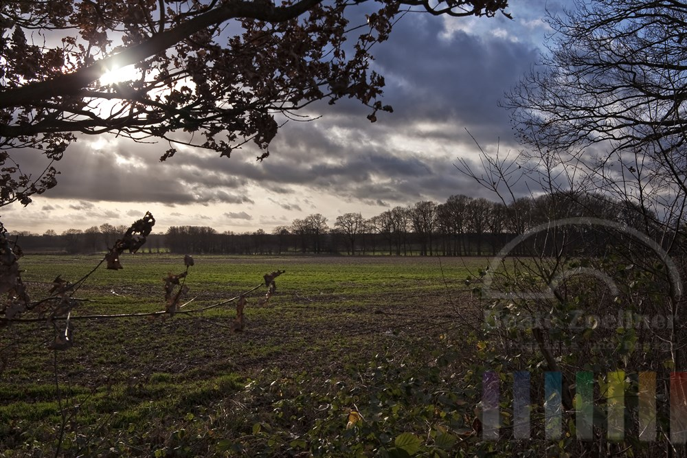 Sonne blinzelt durch die Äste einer alten Eiche und schickt ihre Strahlen auf die november-kahle schleswig-holsteinische Agrarlandschaft