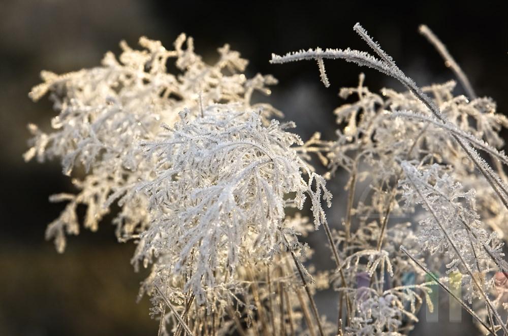 Gräser sind nach einer frostigen Nacht mit Eiskristallen überzogen und glitzern in der Morgensonne