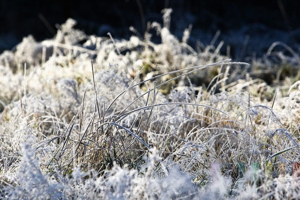 Gräser auf einer Wiese sind nach einer frostigen Nacht mit Eiskristallen überzogen und glitzern in der Morgensonne