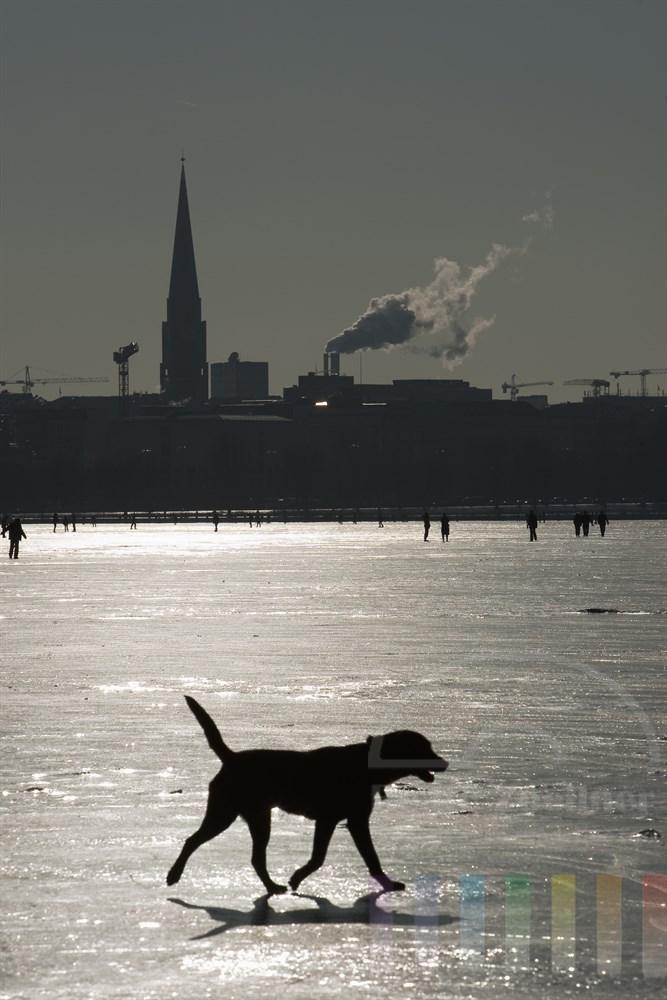 schwarzer Hund läuft im Gegenlicht der Sonne allein über das Eis der zugefrorenen Aussenalster in Hamburg