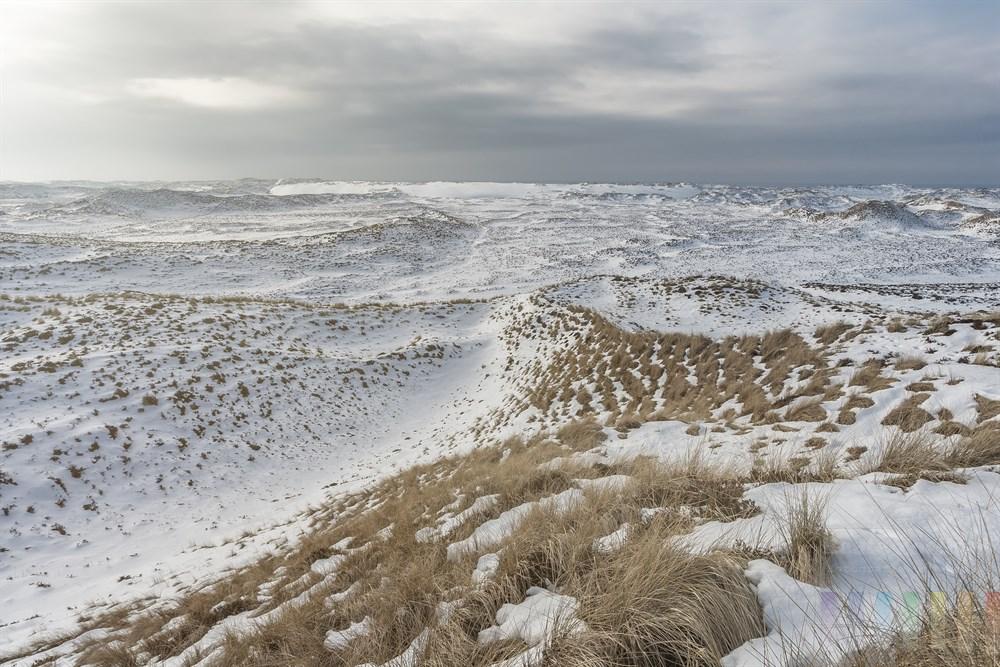 Verschneite und unter strengem Naturschutz stehende Dünenlandschaft im Norden der Insel Sylt. Im Hintergrund die Nordsee