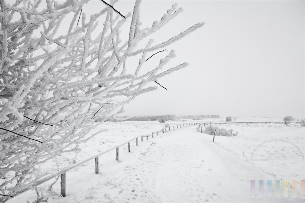 Wanderweg in der verschneiten Braderuper Heide zwischen Wenningstedt und Kampen auf Sylt