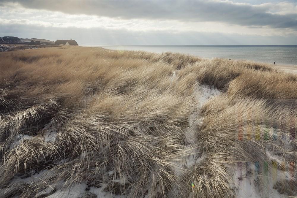 Blick über im schneidend-kalten Ostwind wehende Duüengräser über die Nordsee vor Kampen/Sylt am Roten Kliff in Kampen/Sylt, winterlich. Wenige Urlauber spazieren am Strandentlang. Sonniges Gegenlicht