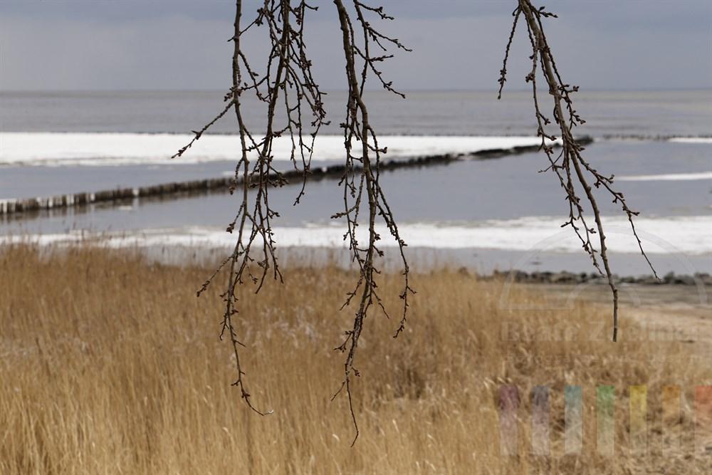 Blick über das noch winterliche Wattenmeer vor Keitum/Sylt bei trübem Wetter. Im Vordergrund Zweige eines Baumes mit dicken Knospen, die den nahenden Frühling ankündigen