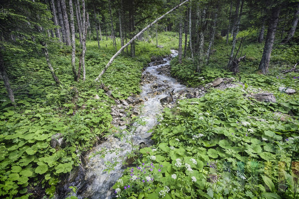 Üppige Vegetation an einem Bergbach, der in den Bergen oberhalb von Kleinarl (Österreich, Salzburger Land) entspringt und durch einen Wald  fließt