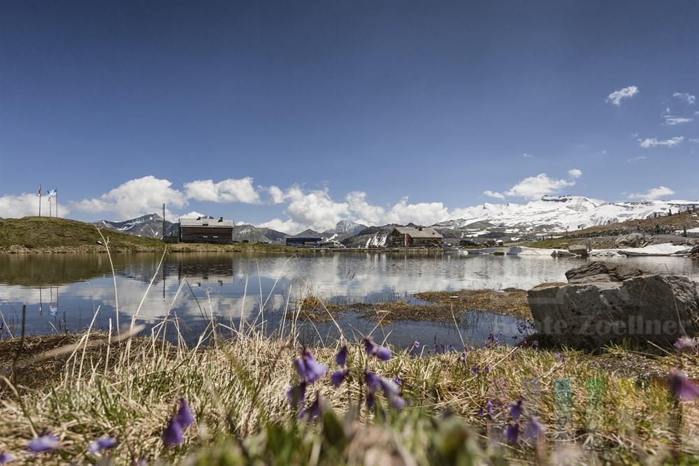 """Die Fuscher Lacke ist ein kleiner Bergsee am Rande der Großglockner Hochalpenstraße. Das Gasthaus """"Mankei Wirt"""" (Bildmitte) lädt zur Rast ein. Am Ufer blühen lilafarbene Zwerg-Soldanelle (Soldanella pusilla), auch Alpenglöckchen genannt"""