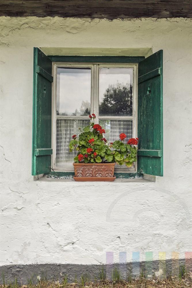 Typischer Alpenland-Stil: Fenster mit grünen Festerländen und einer blühenden Geranie auf dem Festersims. Die Hauswand ist grob weiß verputzt
