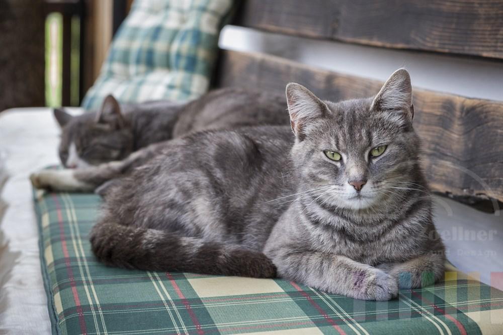 zwei Katzen ruhen auf den karierten  Polstern einer Sitzbank, die auf der Terrasse eines Bauernhofs steht: Die eine Katze schläft, der Kater blinzelt müde in die Kamera