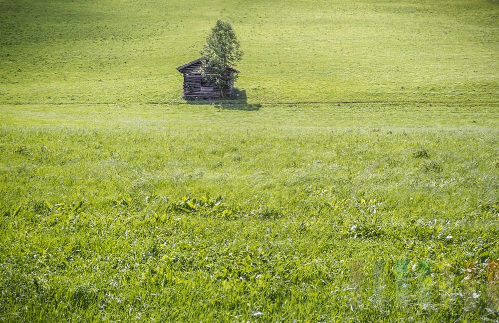 Saftig-grüne Almwiese im Fuscher Tal (Salzburger Land) mit einem verfallenen, hölzernen Heuschober