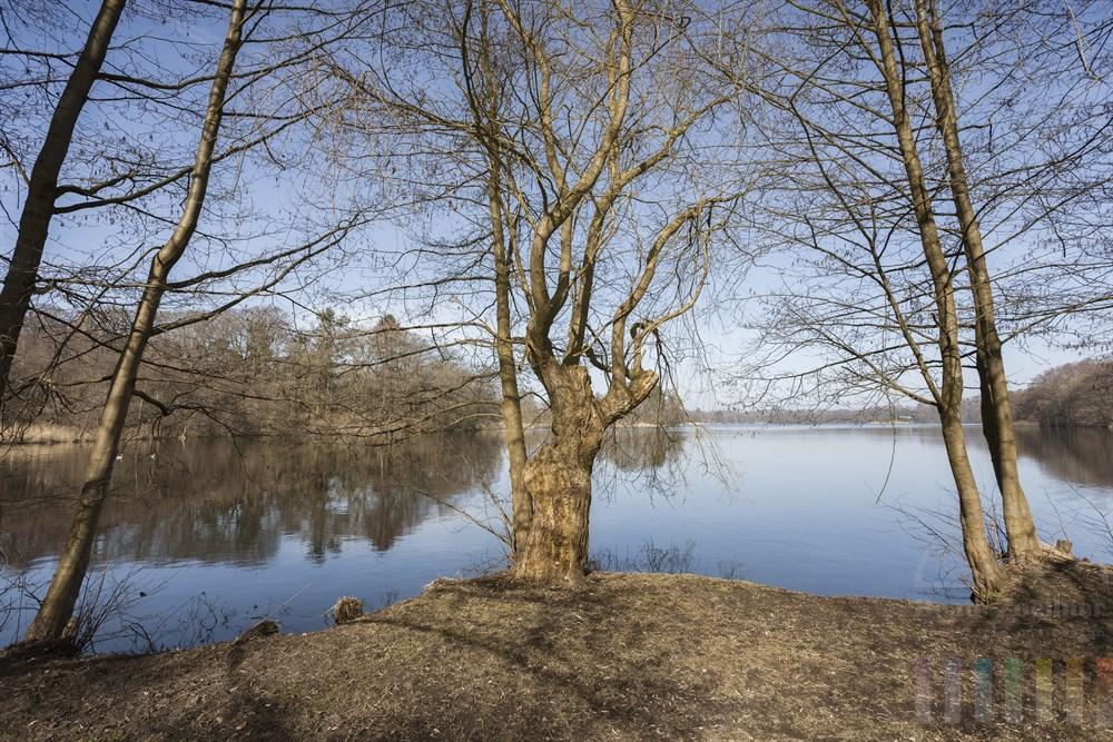 Noch kahle, knorrige Bäume am Ufer des Lütjensees in der Frühlingssonne, blauer Himmel spiegelt sich auf der spiegelglatten Wasseroberfläche