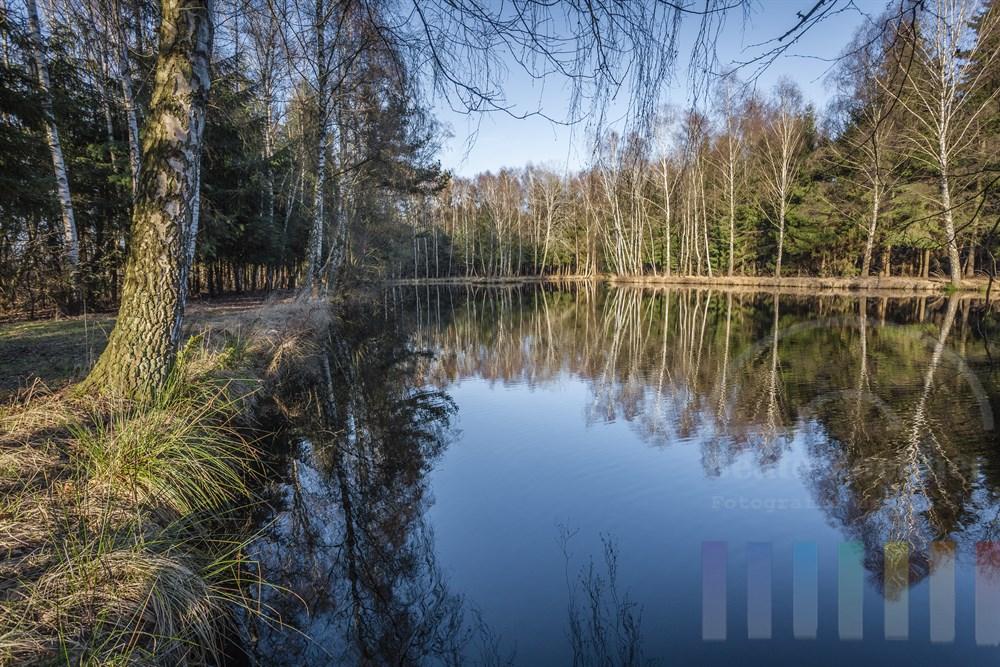 Birken spiegeln sich auf der Wasseroberfläche eines kleinen Waldsees, sonnig-frühlingshaft