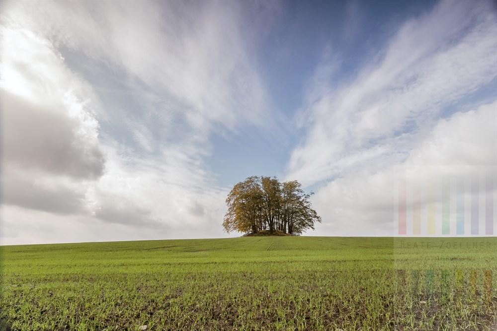 Einer der vier mit Bäumen bestandenen Grabhügel aus der Jungsteinzeit bei Grabau im Kreis Storman, Schleswig-Holstein