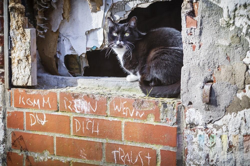 """Katze sitzt im Fenstersims eines Abbruchhauses in der Sonne. Auf der Mauer unter ihr steht """"Komm rein wenn Du Dich traust"""""""