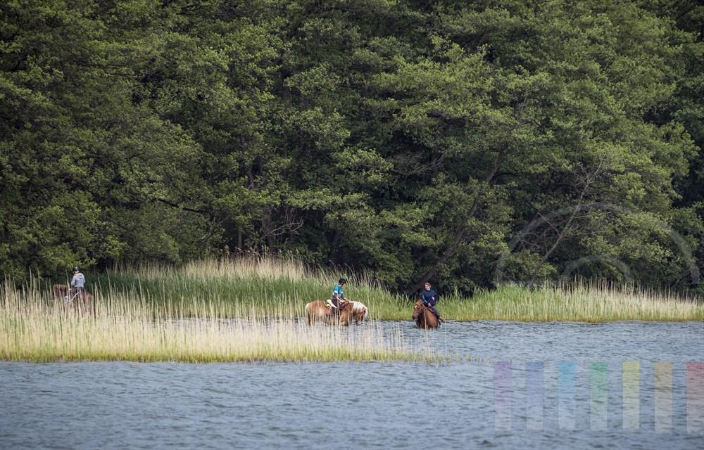 Junge Frauen reiten mit ihren Pferden durch das Wasser am Ufer des Selenter Sees