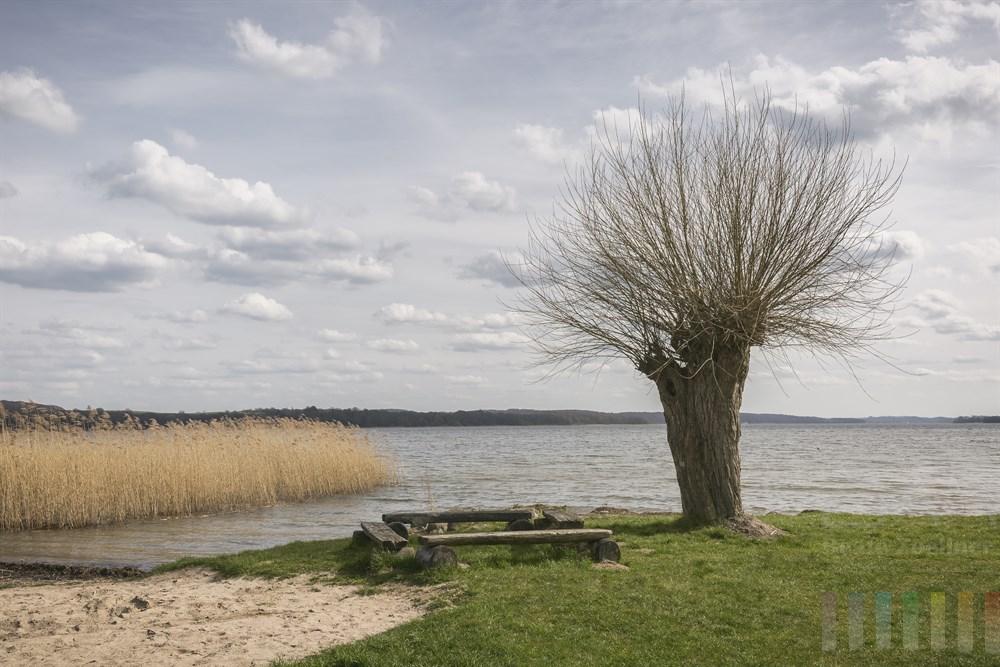 Weide steht am Ufer des Ratzeburger Sees, frühlingshaft-sonnig aber windig