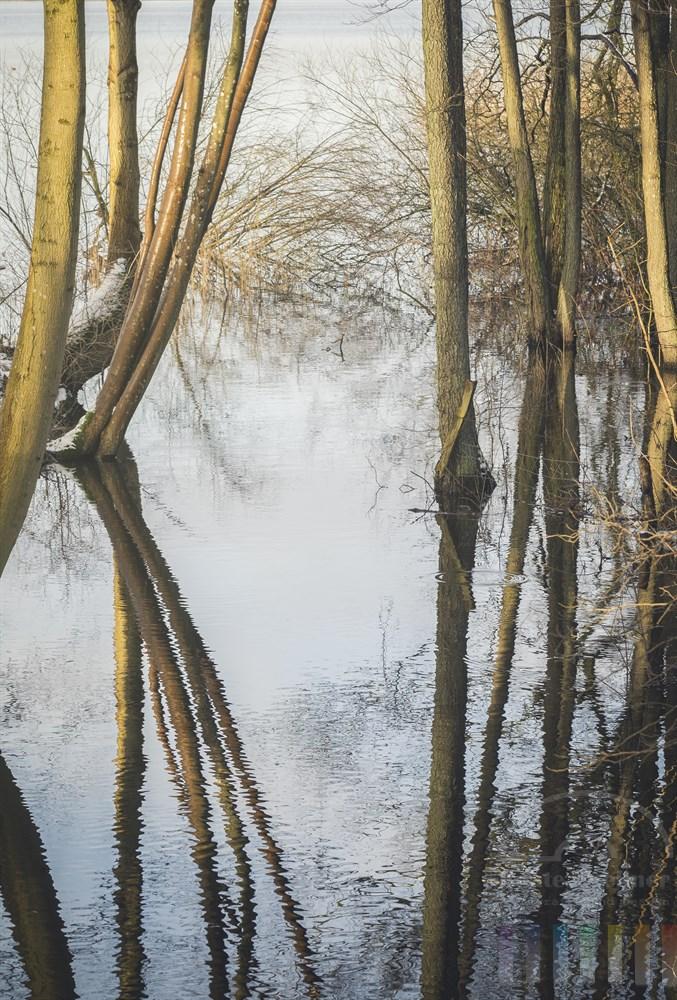 Von der tief stehenden Wintersonne angestrahlte Baumstämme spiegeln sich im Wasser einer kleinen Bucht am Bothkamper See (Schleswig-Holstein). An dieser Stelle mündet der Bach Dosenbek in den See