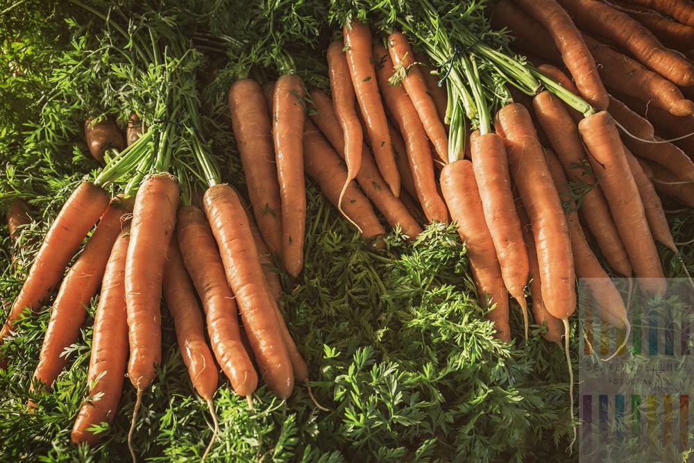 Frisch geerntete Mohrrüben glänzen in der Herbstsonne an einem Marktstand