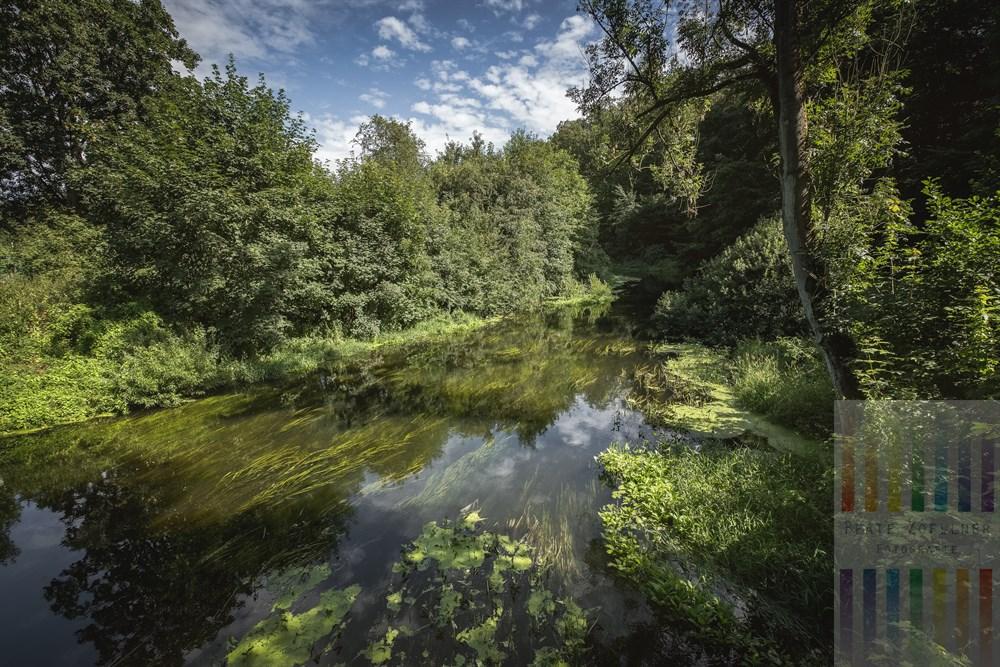 An der Trave bei Nütschau im Kreis Stormarn. Hier fließt der Fluss naturbelassen und ungestört - ein Paradies für zahlreiche Tier- und Pflanzenarten