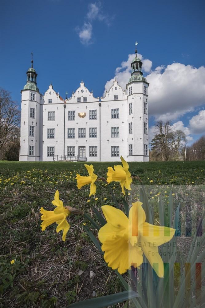 Narzissen blühen vor dem in der Frühlingssonne strahlenden weißen Fassade des Ahrensburger Schlosses