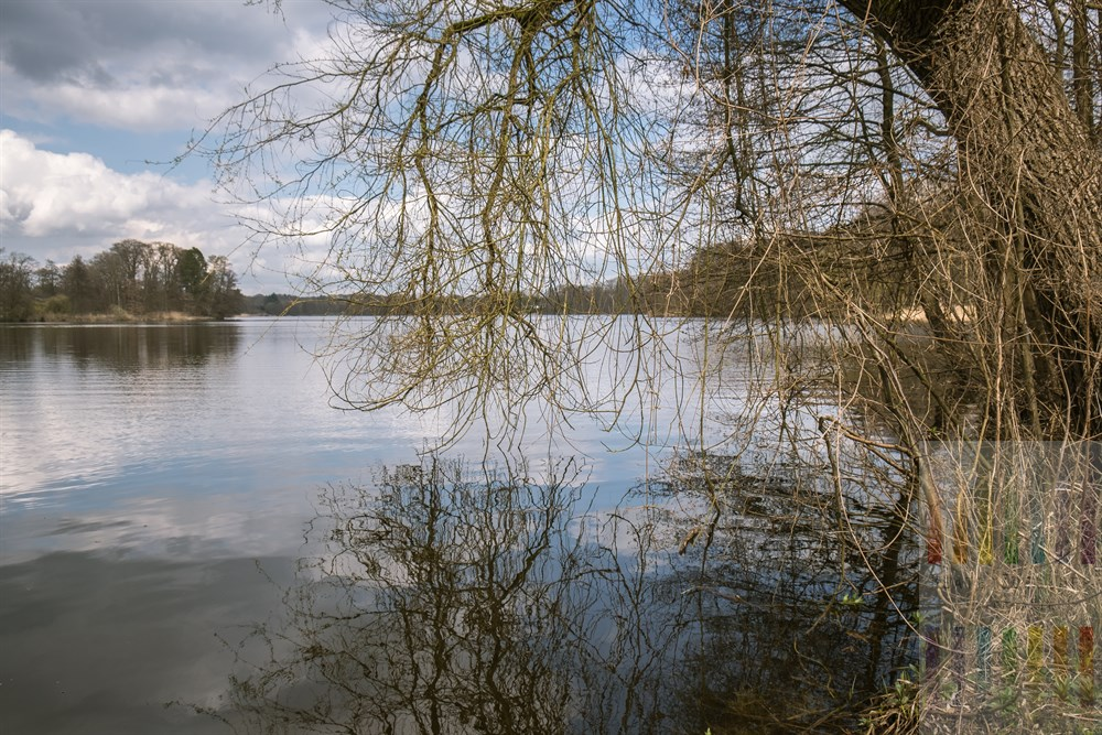 Tief hängende Zweige über der Wasseroberfläche des Lütjensees an einem heiter bis wolkigen Frühlingstag im April