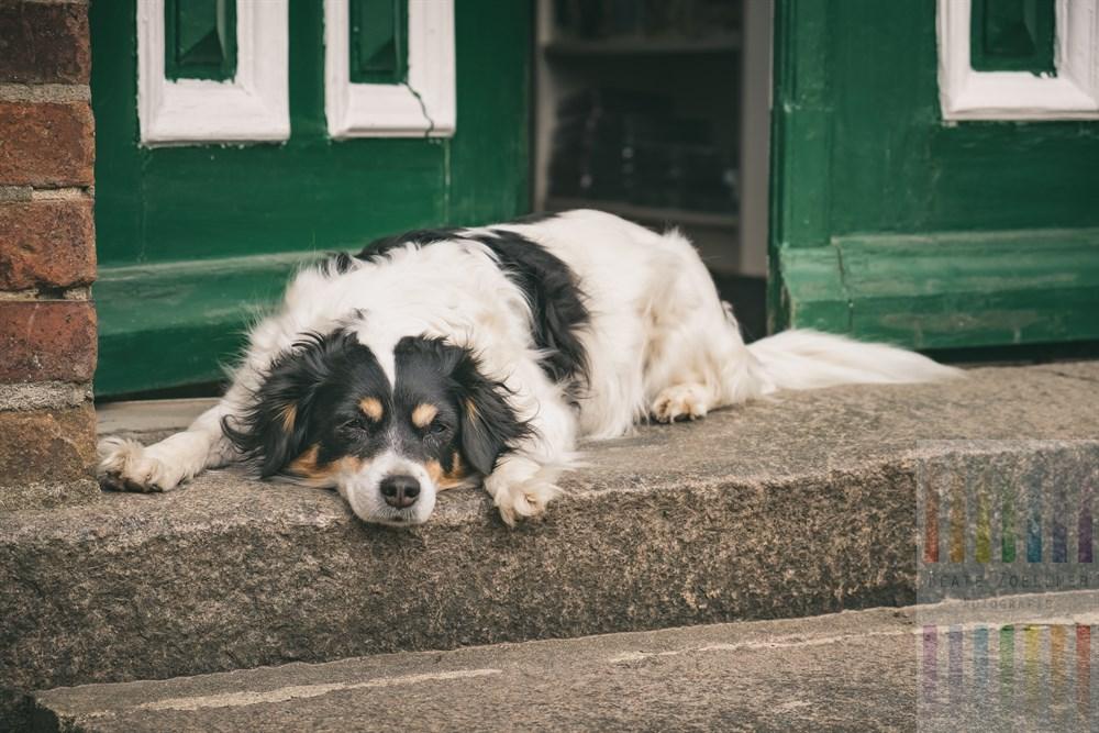 Schläfrige Hündin liegt auf der Stufe vor der geöffneten Haustür, dörfliche Szene