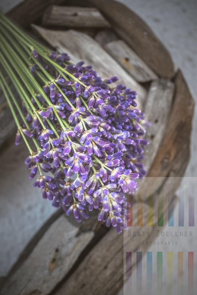 Blühende Lavendel-Stängel sind zu einem Strauß zusammen gebunden und hängen zum Trocknen an einem verwitterten Deko-Holz-Herz