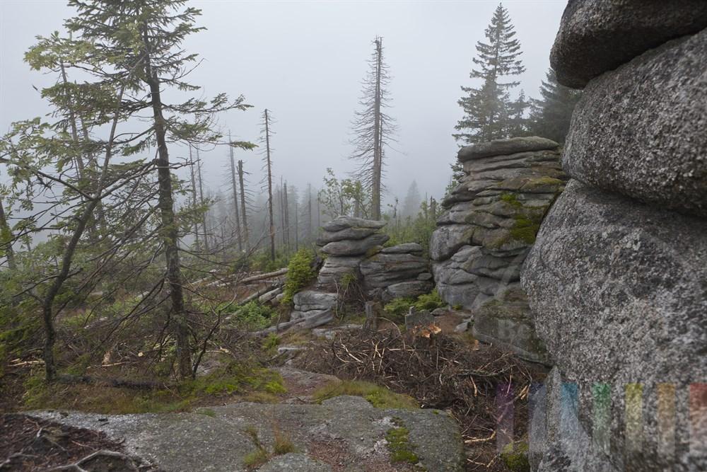 Nebelstimmung am Dreisesselberg im Bayerischen Wald
