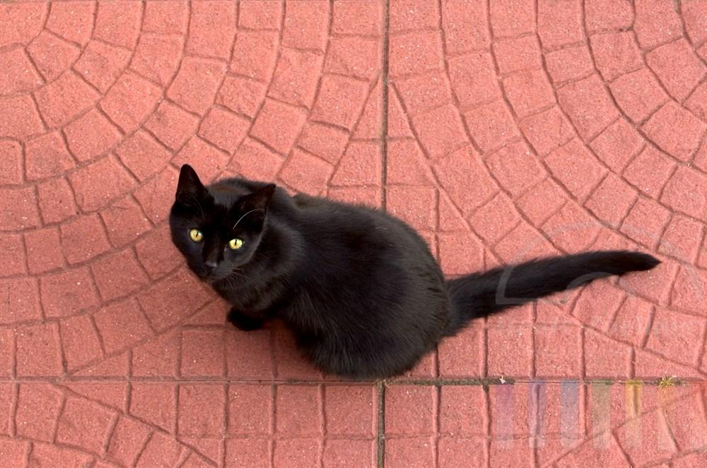 Aufsicht: Schwarzer Kater sitzt auf rötlichem Steinboden einer Terrasse  und schaut nach oben direkt in die Kamera