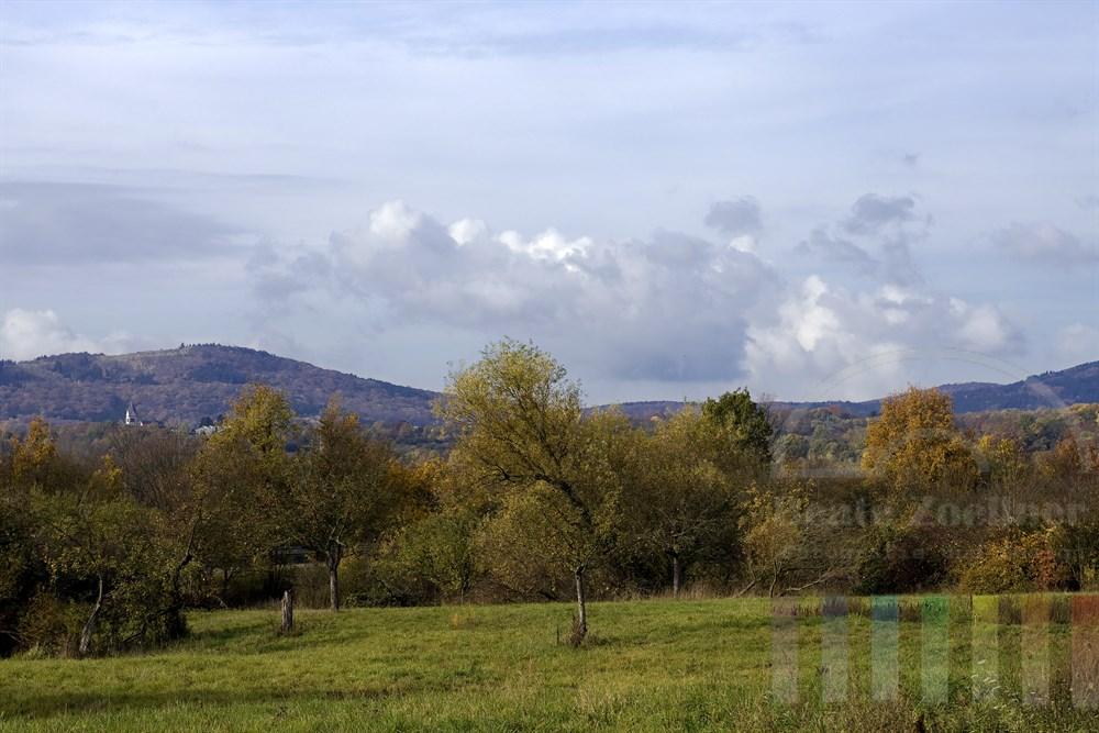 Herbstlich verfärbte Obstbäume auf Wiesen, Nähe Kelkheim am Taunus. Im Hintergrund ist das Wahrzeichen der Stadt, das Fransiskaner-Kloster, zu sehen