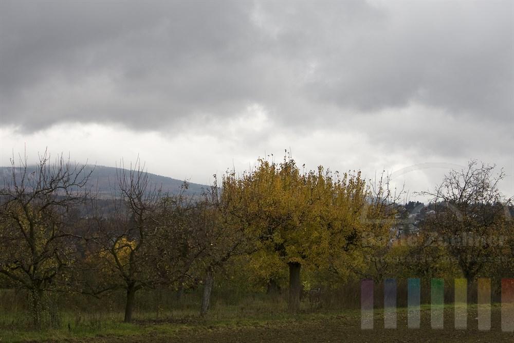 herbstlich verfärbte Obstbäume stehen unter wolkenverhangenem Himmel, Nähe Bad Soden, Hessen