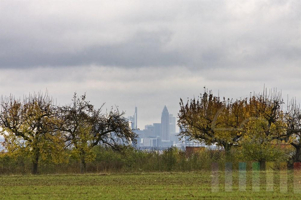 Blick von ländlicher Umgebung auf die Skyline der Metropole Frankfurt bei wolkenverhangenem Himmel, herbstlich