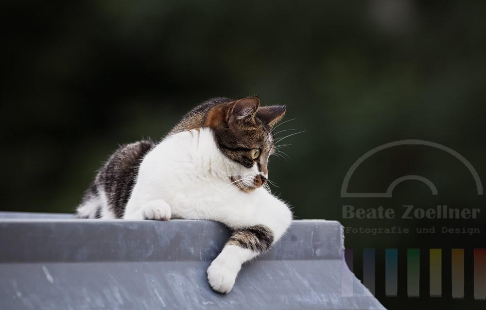 bunte Hauskatze liegt auf einem Vordach und beobachtet genau ihre Umgebung