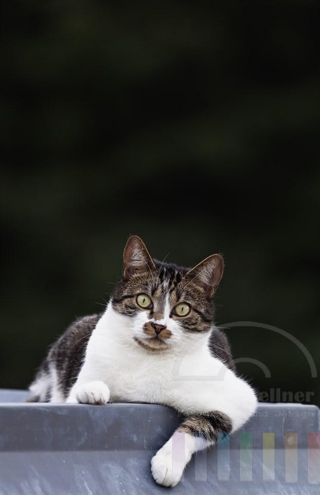bunte Hauskatze liegt laessig auf einem Vordach und schaut direkt in die Kamera