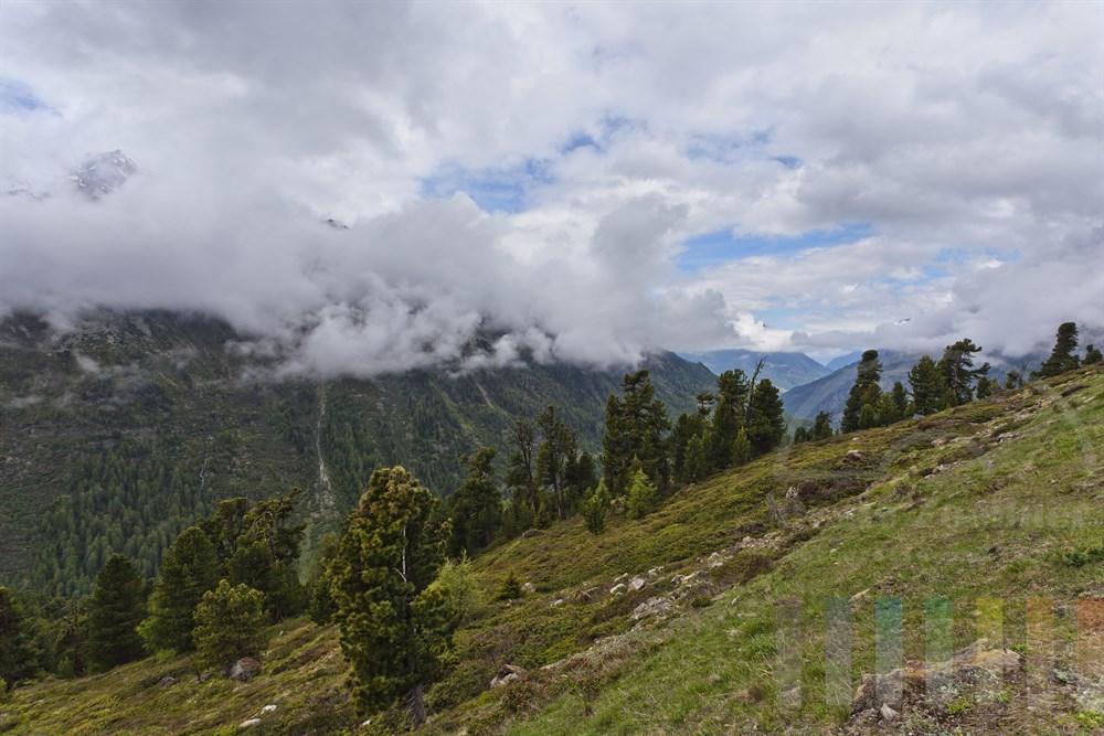 An der Baumgrenze in den Oetztaler Alpen