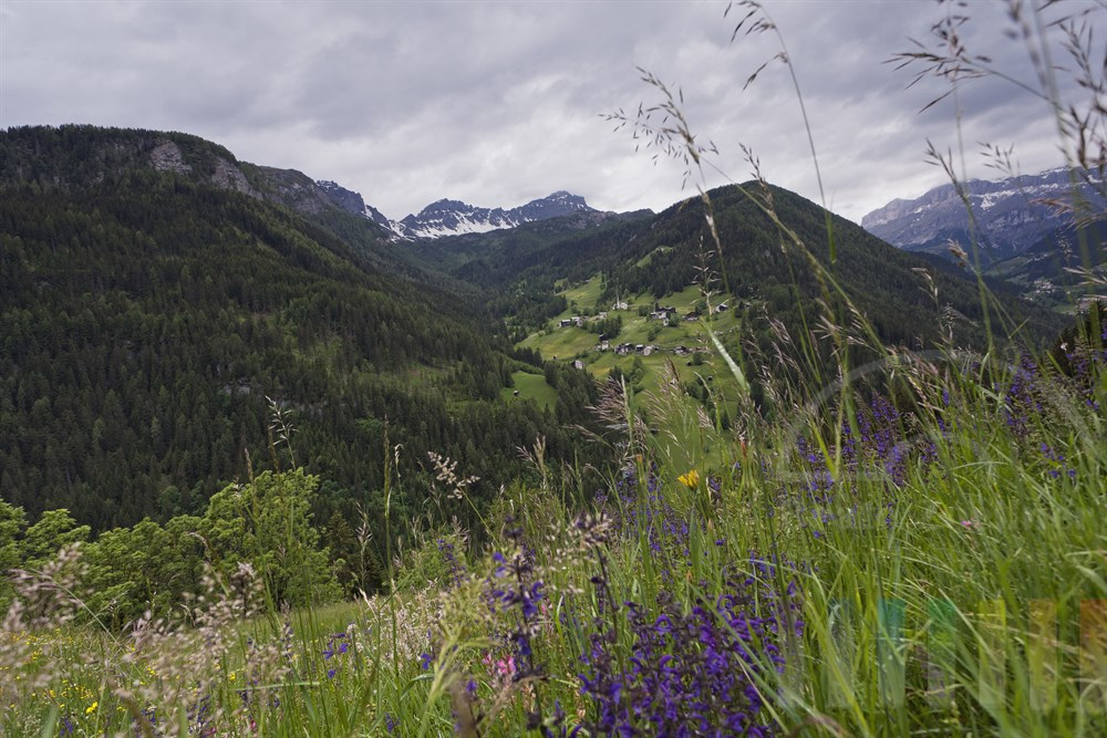 Blick ueber eine bunt bluehende Bergwiese in den Dolomiten auf ein Dorf Naehe Arabba. Rechts die Feldwaende der Sella-Gruppe