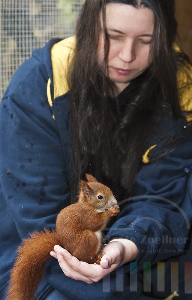 Obwohl Nadine Seibold (27) in ihrer Karriere als Eichhörnchen-Ziehmutter schon mehr als 40 Tiere großgezogen und ausgewildert hat, fällt ihr jedes Mal der Abschied von ihren Zöglingen schwer. Bei Sweetie war´s besonders schlimm: Knapp 5 Monate war das kleine Hörnchen bei ihr. Passend zum für Nadine traurigen Anlass weinte auch der Himmel am Tag der Auswilderung
