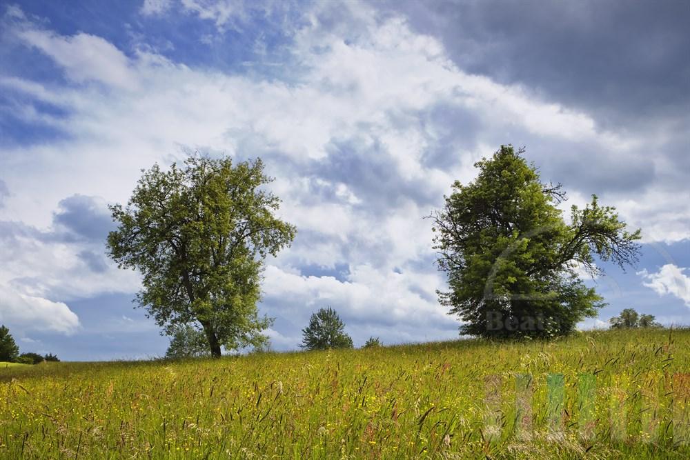 Sommerliche Wiesen-Landschaft im Bergischen Land bei aufziehendem Gewitter
