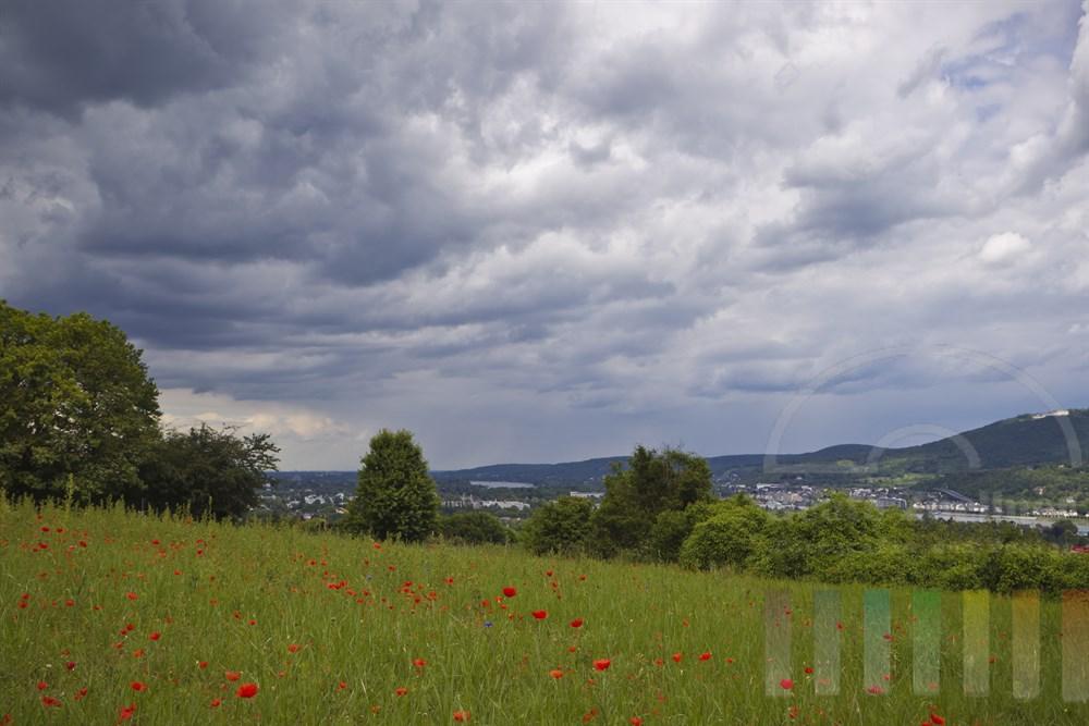 Drohende Gewitterwolken ueber einer Klatschmohnwiese auf der Landesgrenze zwischen Nordrhein-Westfalen und Rheinland-Pfalz - rechts am Bildrand der Petersberg, im Tal der Rhein