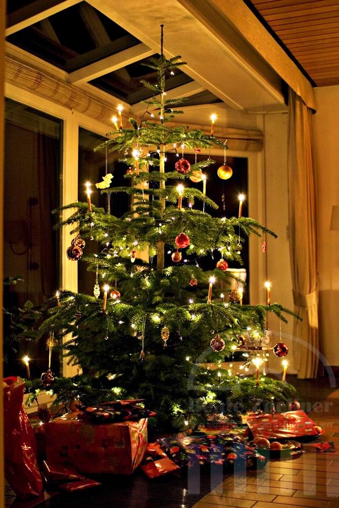traditionell geschmückter Weihnachtsbaum steht in einem Wohnzimmer, unter der Tanne liegen liebevoll eingepackte Geschenke