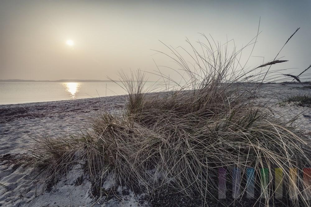 Büschel von Dünengräsern am Strand von Laboe (Lreis Plön) an der Kieler Förde. Die milchige Sonne steht tief über dem Wasser