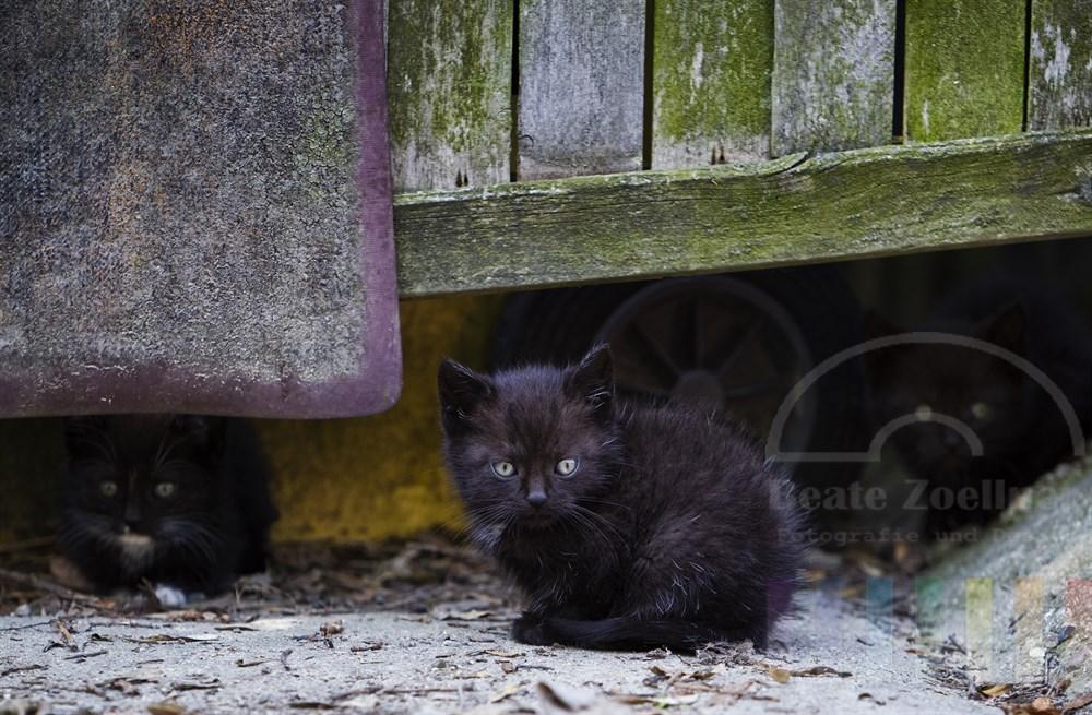 drei ca. 5 Wochen alte Katzenjunge gucken auf einem Bauernhof unter einem Zaun hervor
