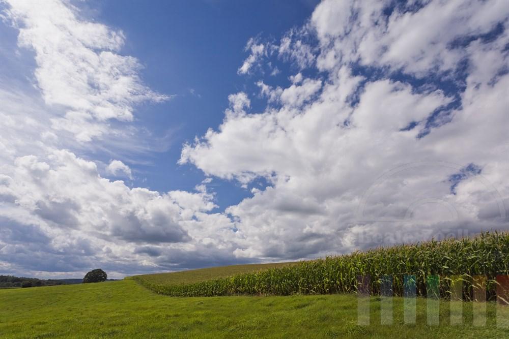 Agrarlandschaft mit Maisfeld kurz vor der Ernte im Oberbergischen Land nahe der Ortschaft Geringhausen, wechselhaftes Wetter